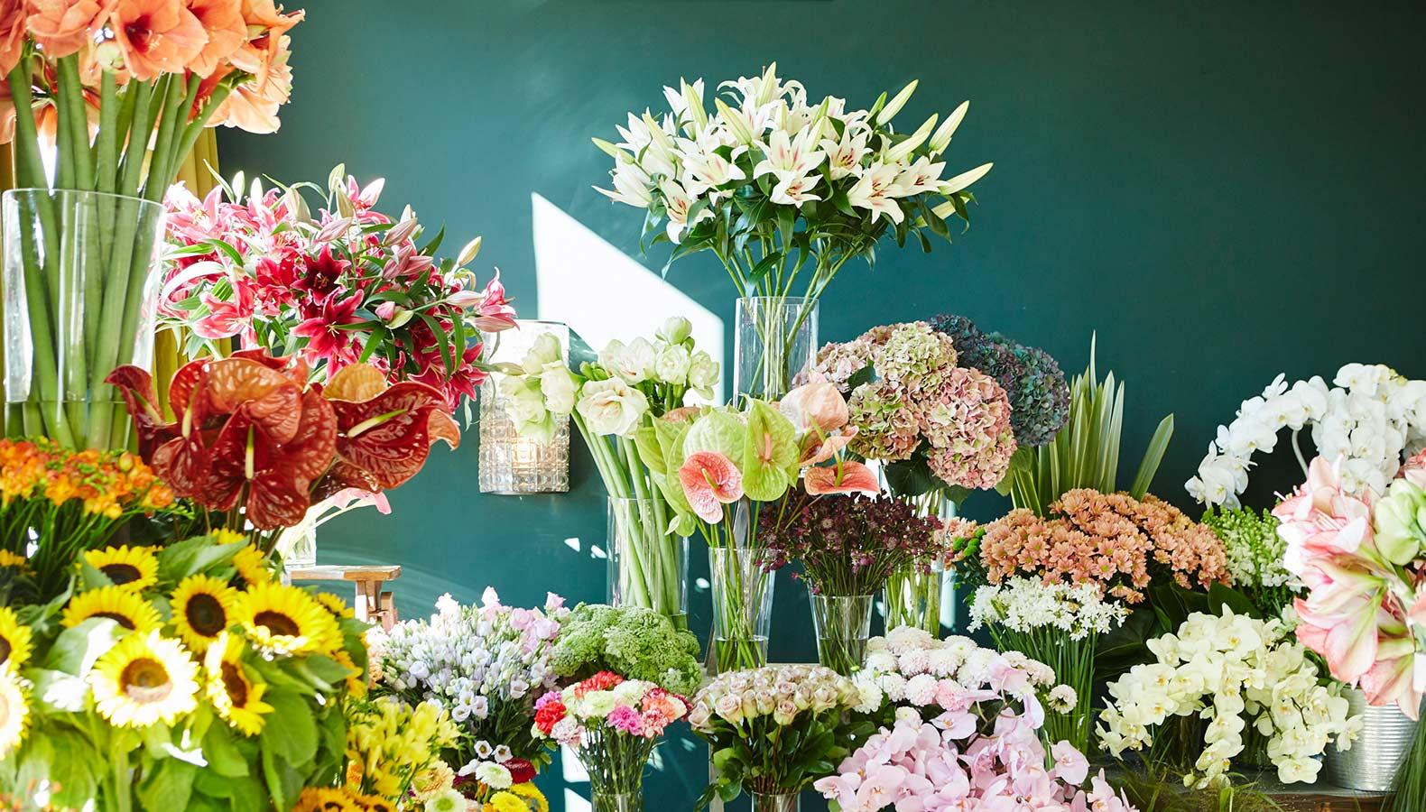 Blumen vor grün-blauer Wand. Sonnenblumen, Amaryllis, Hortensien.